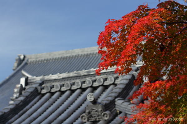 autumn red-maple Saikyouji temple Shiga