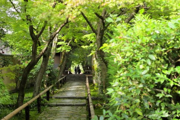 green Kouetsuji temple Kyoto