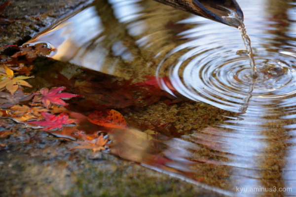 autumn ripples red-maple Imakumanokannonji temple