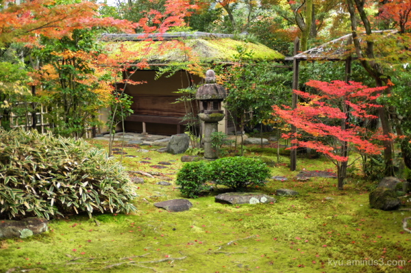 autumn garden red-maple Daihouin temple Kyoto