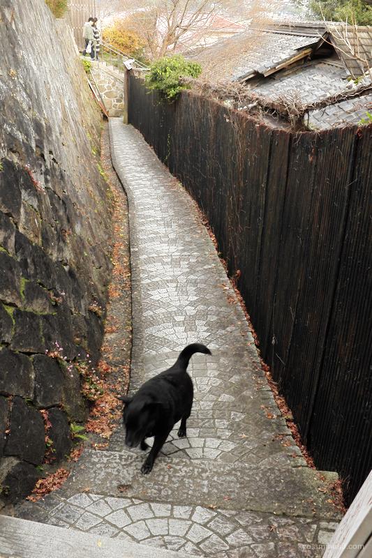 dogwalk slope Onomichi Hiroshima