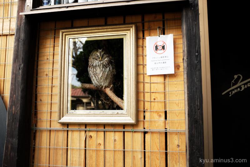 owl frame Onomichi Hiroshima