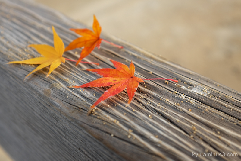 autumn-mood red-maple-leaves Onomichi