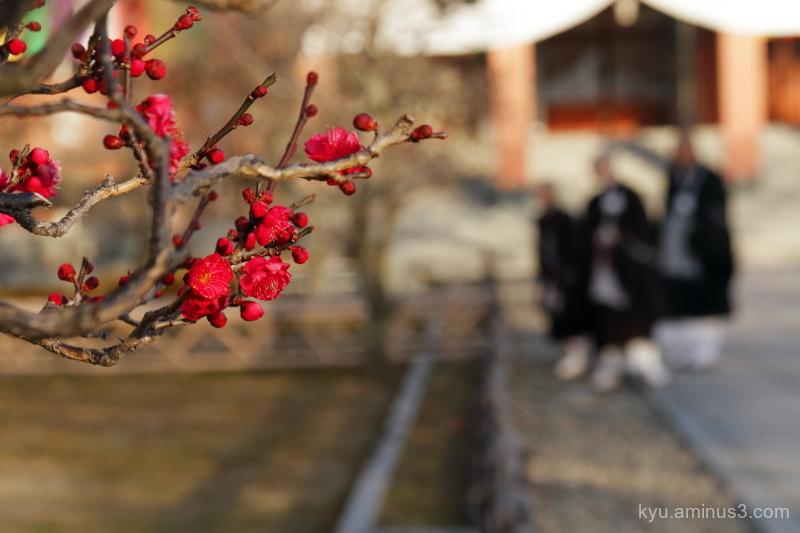 Japanese-plum monks Chishakuin temple Kyoto