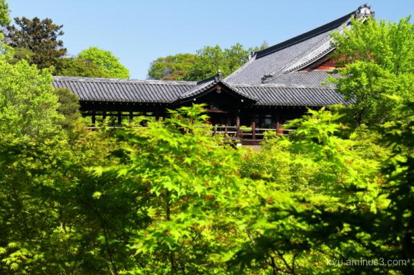green-maple Tsuutenkyo tofukuji temple Kyoto