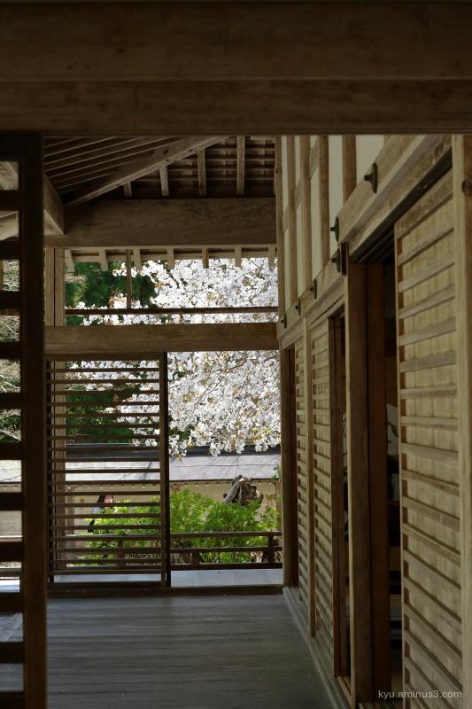 corridor cherry-blossoms Joshokoji temple Kyoto