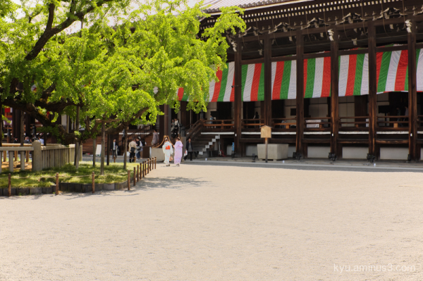 green-ginkgo Nishihonganji temple Kyoto
