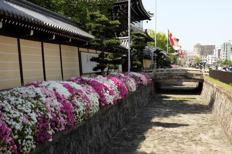 azalea blossoms Koshoji temple kyoto