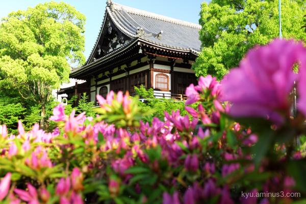 azalea green-maple Chishakuin temple Kyoto