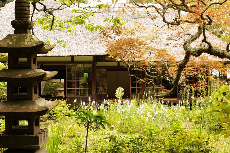 garden Jochiji temple Kamakura Kanagawa