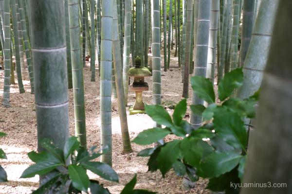 bamboo-grove Houkokuji temple Kamakura Kanagawa