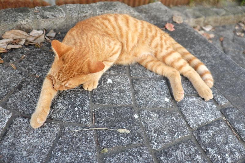sleepy-afternoon cat Onomichi Hirosima