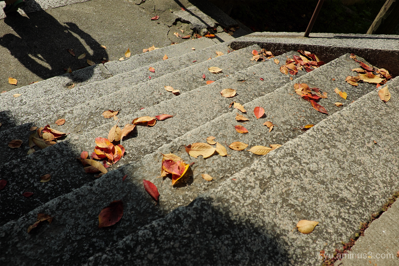 early-winter leaves shadow Onimich Hiroshima