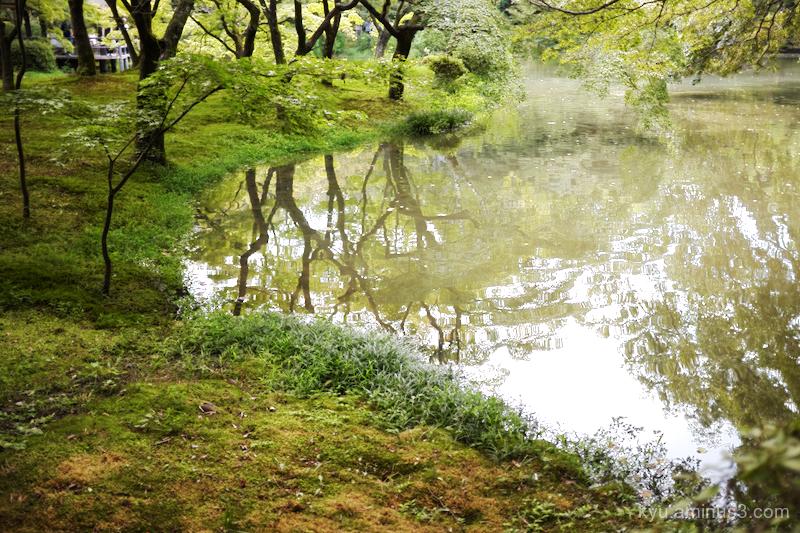 reflections pond botanical-garden Kyoto