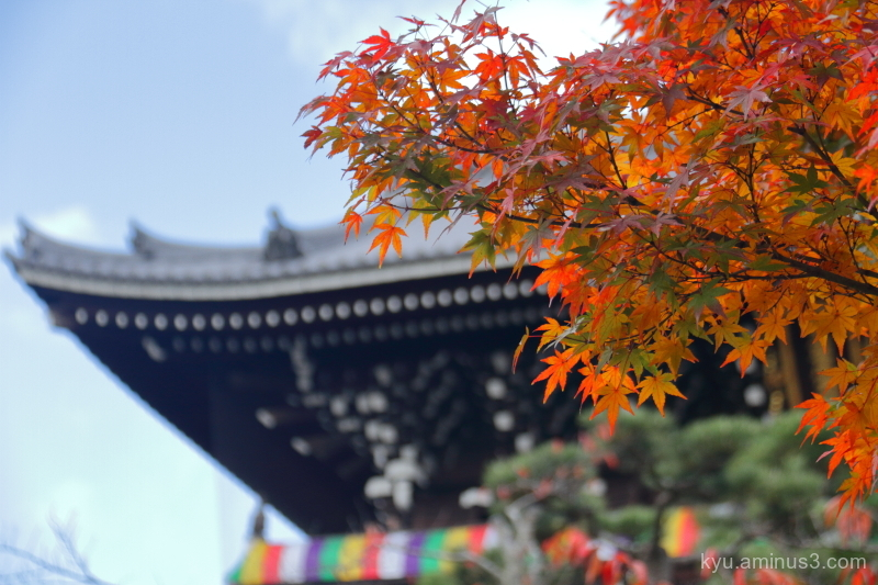 red-maple Konkaikomyoji temple Kurodani Kyoto