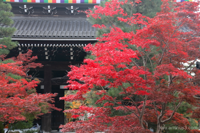 autumn red-maple Konkaikomyoji temple Kyoto