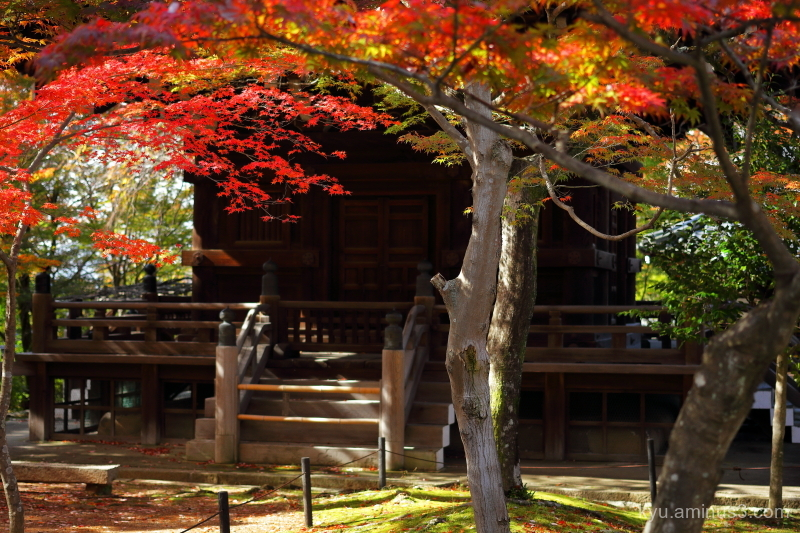 autumn red-maple pagoda Shinnyodo temple Kyoto