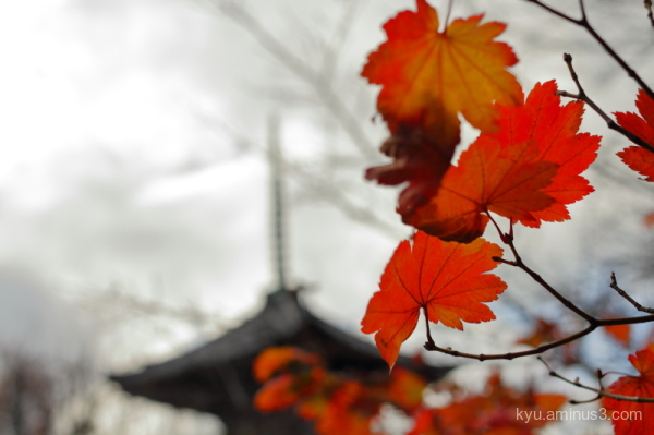 red-maple pagoda Shinnyodo temple Kyoto
