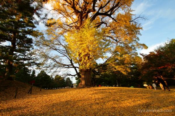 ginkgo Gosho Kyoto