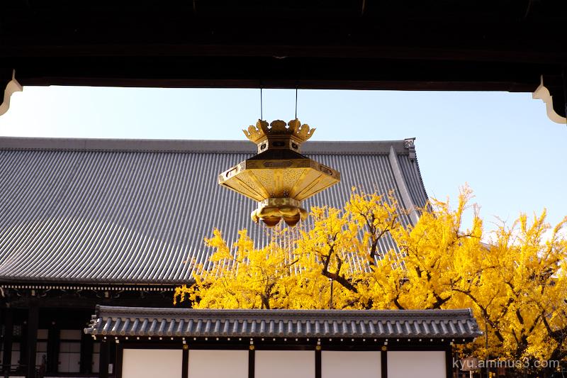 gate Gingko Nishihonganji temple Kyoto