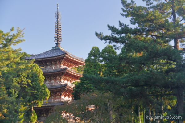 silver-grass Konkaikomyoji temple Kurodani Kyoto