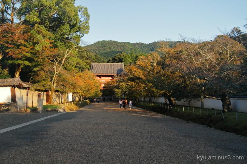 afternoon-light Daigoji temple Kyoto