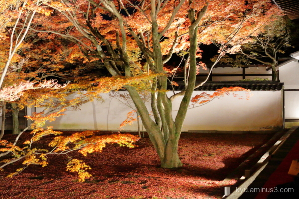 night-view red-maple Myokakuji temple Kyoto