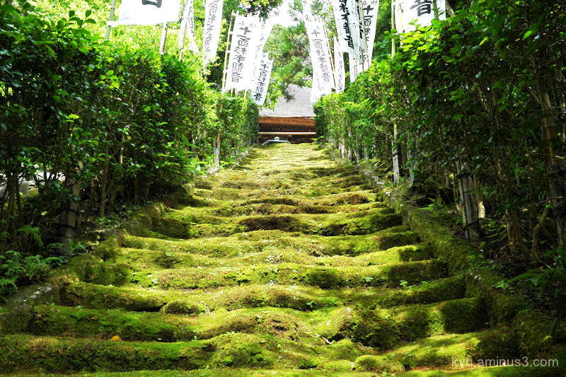 steps moss Sugimotodera temple Kamakura Kanagawa