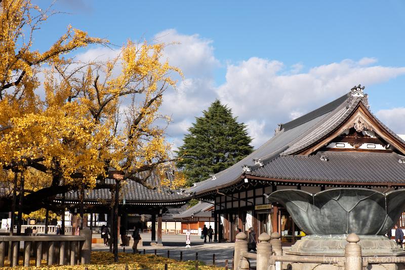 autumn ginkgo Nishihonganji temple Kyoto