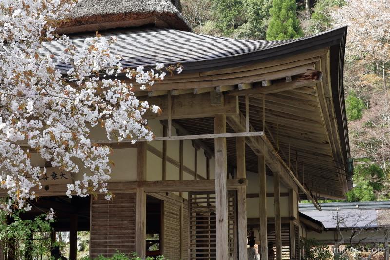 spring cherry-blossoms Jyoshokoji temple Kyoto