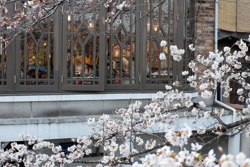 cherry-blossoms cafe Takasegawa Kyoto
