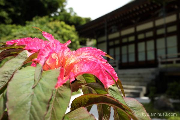 flower Hokokuji temple Kamakura Kanagawa
