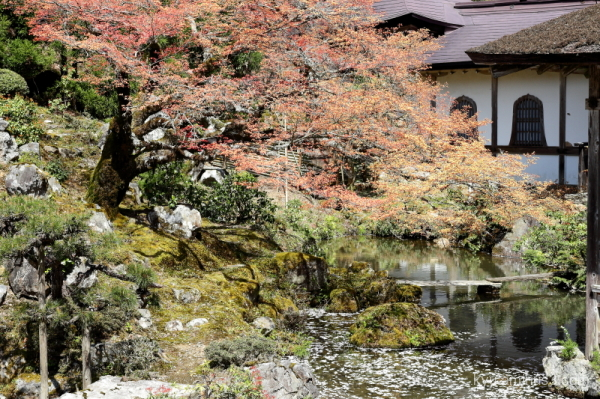 garden Cherry-blossoms joshokoji temple kyoto