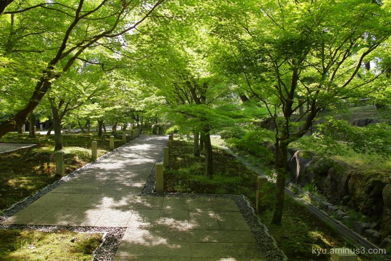 green-maple Chishakuin temple Kyoto