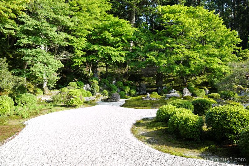 fresh-green garden Manshuin temple Kyoto