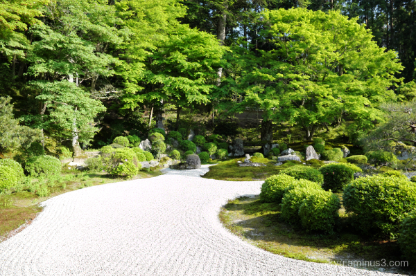 fresh-green garden Manshuin temple Kyoto