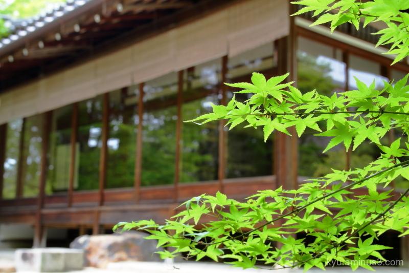 green-maple Tenjuan temple Kyoto