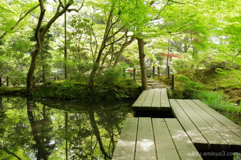 green-maple garden tenjyuan temple Kyoto