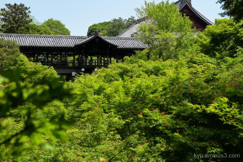 green-maple Tofukuji temple Kyoto