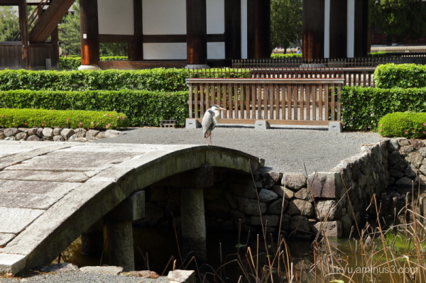 heron bridge pond Tofukuji temple Kyoto