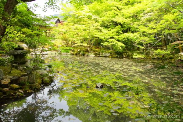 dry-garden green-maple Tenjyuan temple Kyoto