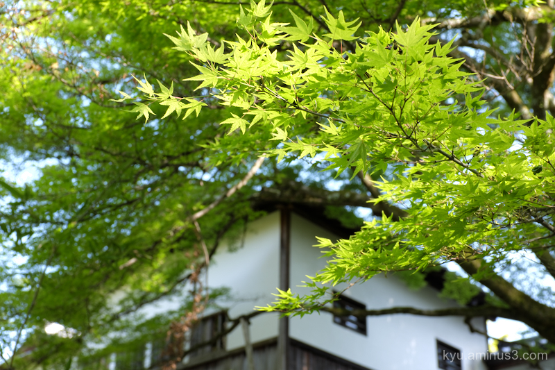 green-maple Manshuin temple Kyoto