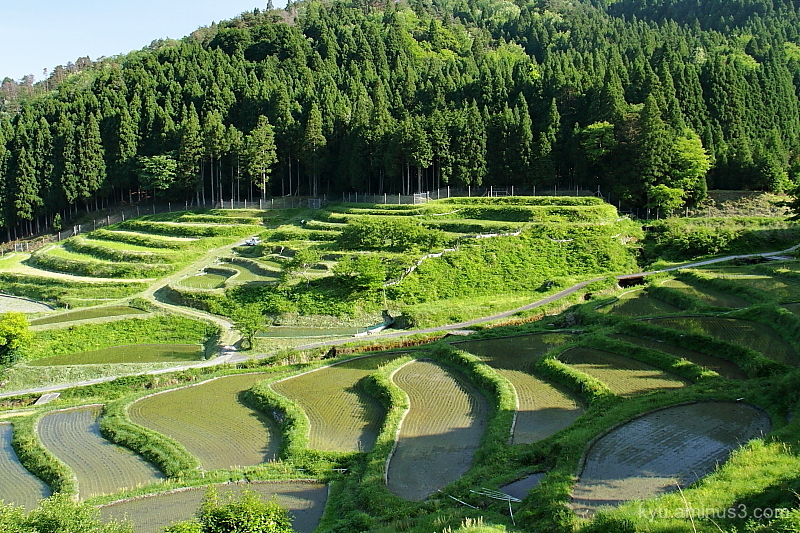 terraced-paddy Hata Shiga