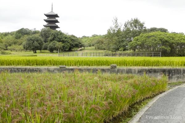 Pagoda rice-paddy Bicchukokubunnji Temple Kibi Oka