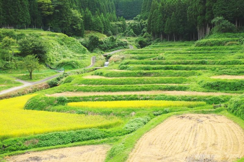 terraced-paddy Hata Shiga