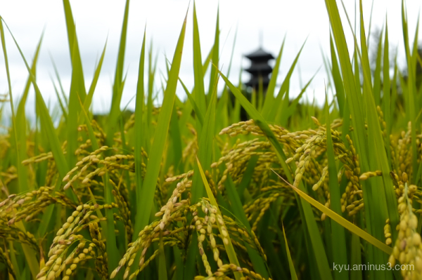 rice-paddy pagoda Bitchukokubunji Kibi Okayama