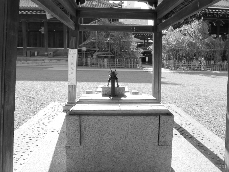 afternoon-light Bukkoji temple Kyoto mono
