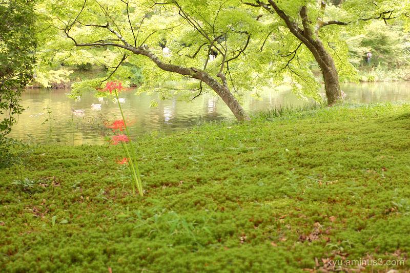 autumn botanical-garden Kyoto