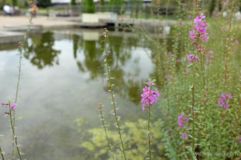 autumn flowers botanical-garden Kyoto