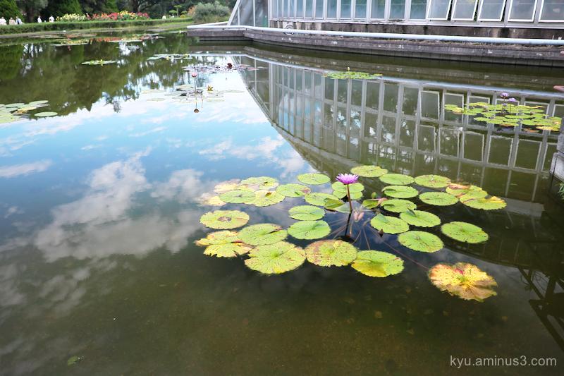 reflections botanical-garden kyoto